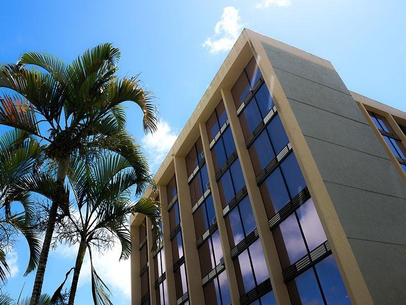 The Palms of Kilani